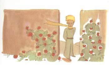 小王子和玫瑰花